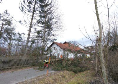 Sturm Sabine Bild 5